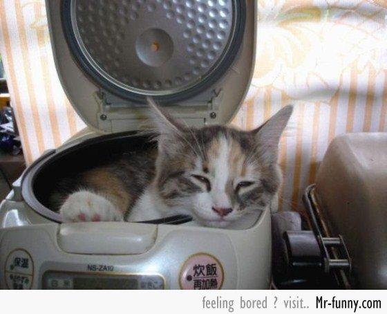 gatos-siesta-7