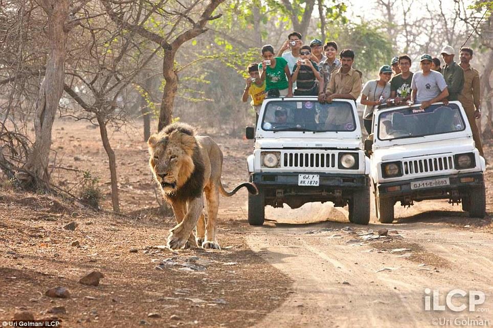 leonas-crias-leon-01