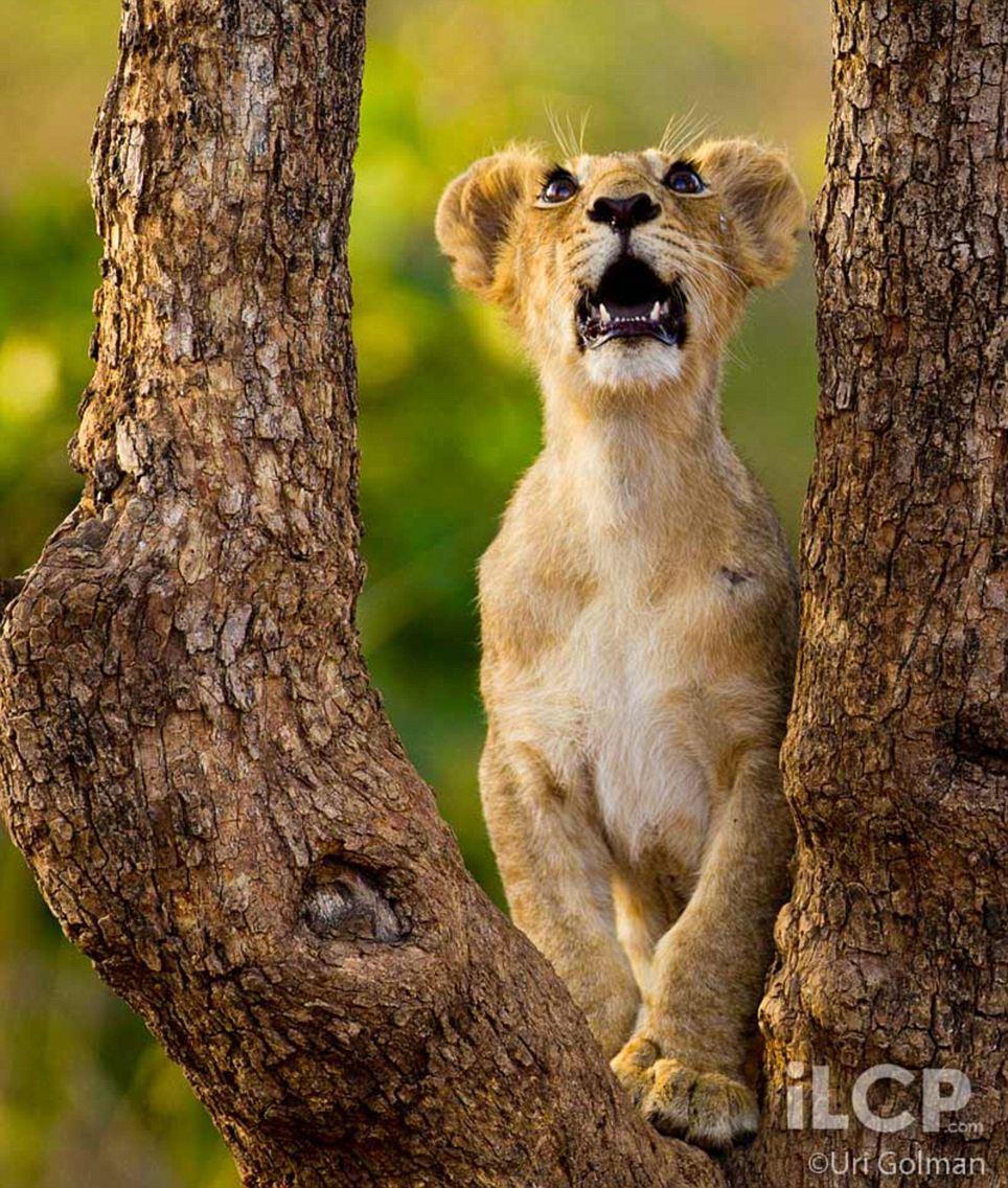 Indias Last Lions