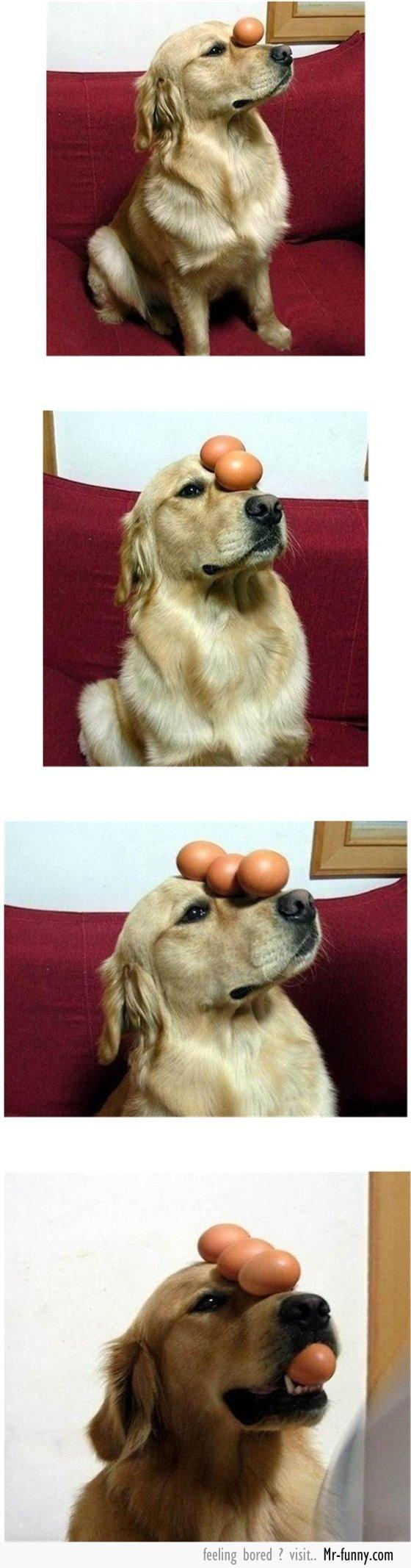 perro-1