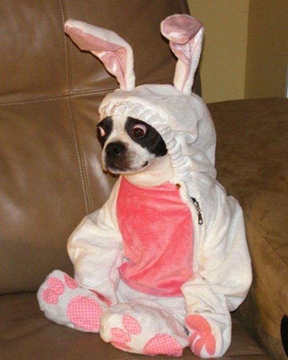 perro-disfraz-f