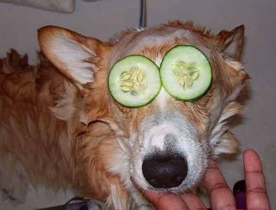 perro-f