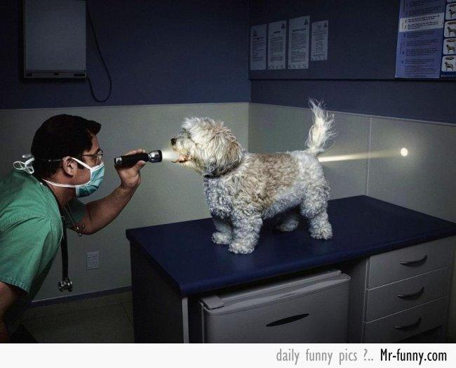 perro-veterinario-f