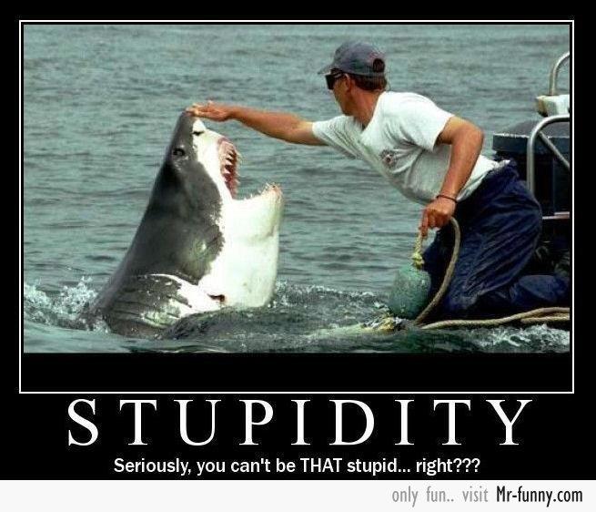 stupid-f