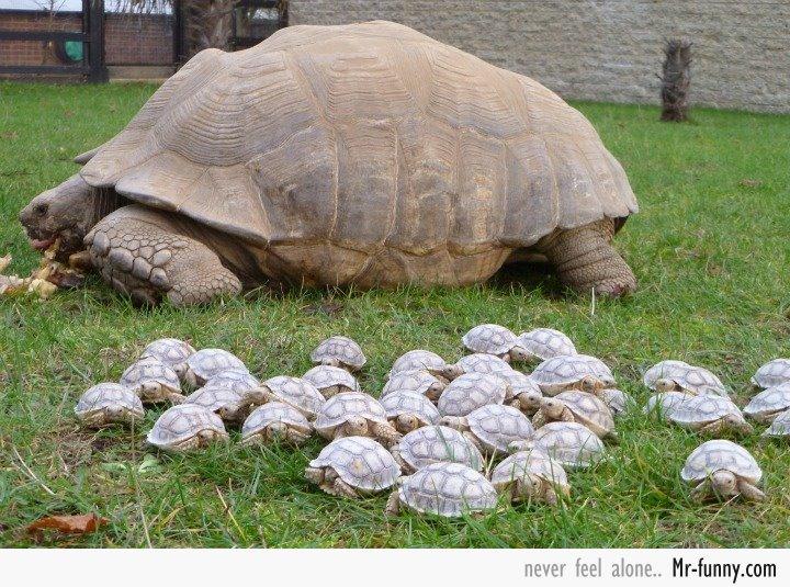 tortuga-mama