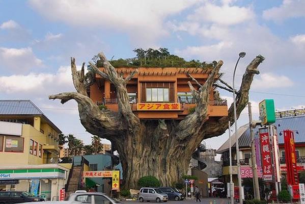 casa-arbol-restaurante-okinawa-japon