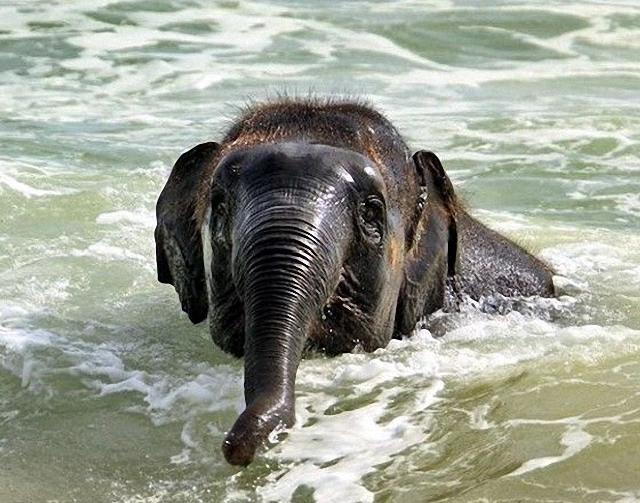 elefante-jugando-playa1