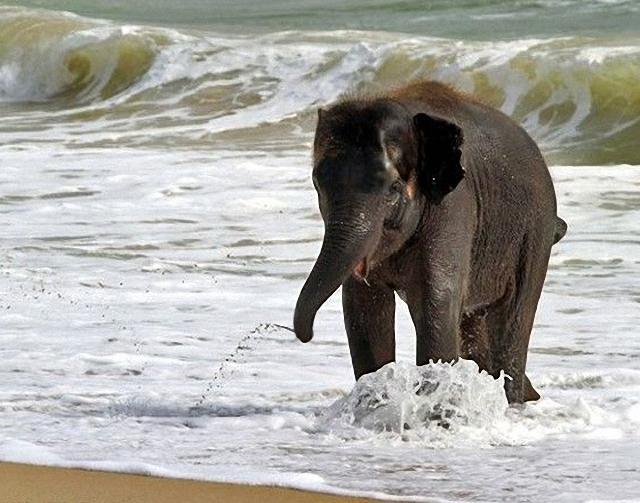 elefante-jugando-playa3