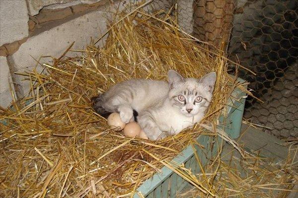 gato-corral