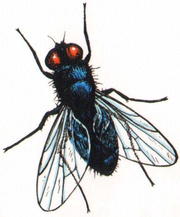 mosca muerte