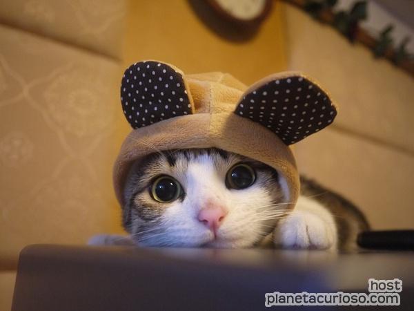 gatito-mas-tierno-del-mundo