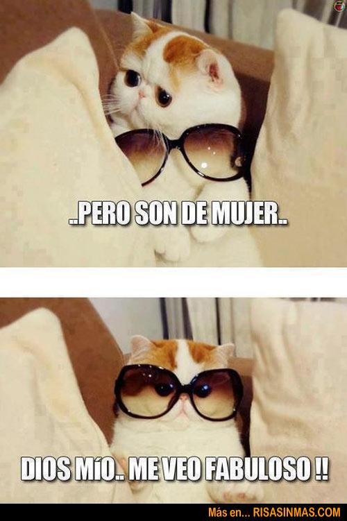 gato-con-gafas-fabuloso