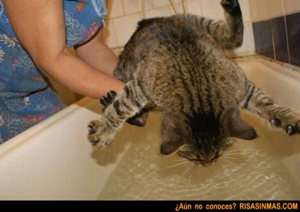 gato-resistiendose-al-bano-rsm-600x425