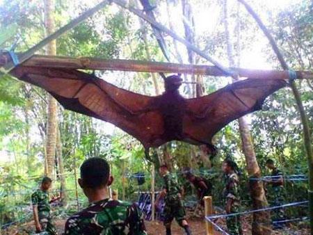 human_sized_bat