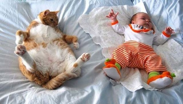 i_babies_and_cats