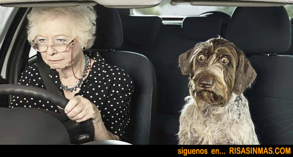 perro-asustado-rsm