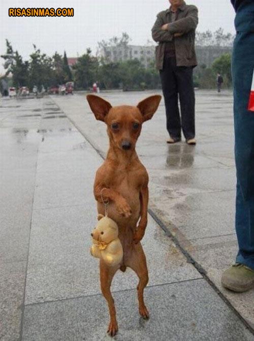perro-paseando-rsm