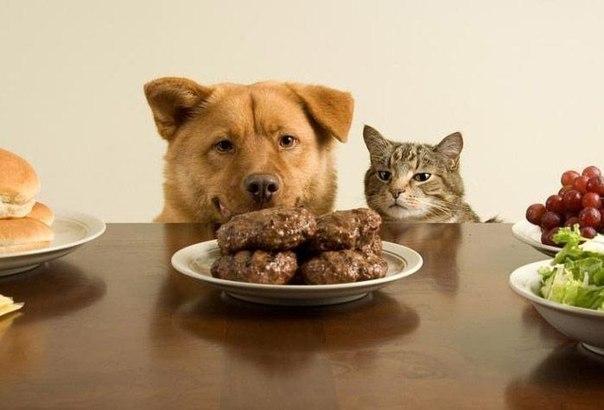 perro gato comida