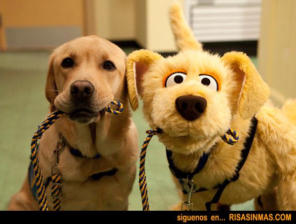perros-rsm