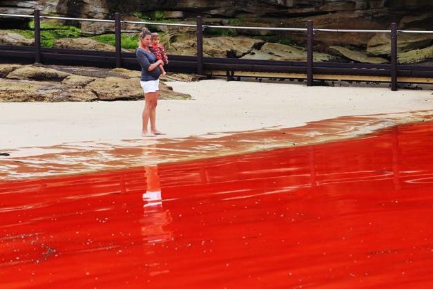 marea-roja-australia