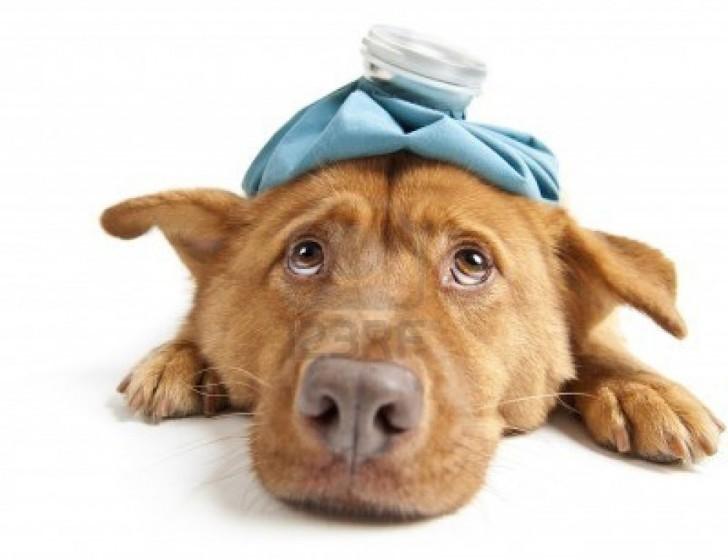 8290007-sick-dog