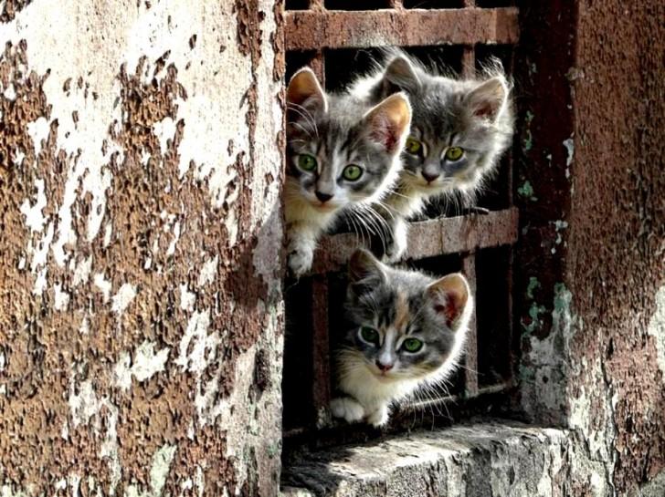 kity prison