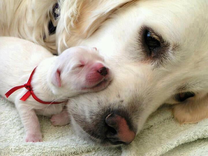 Mother ..... Источник: http://goo.gl/zfWWD