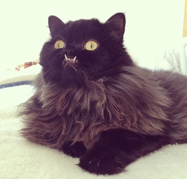 dientes-gato-monster