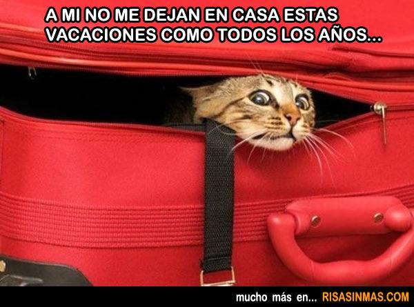 gato-escondido-en-la-maleta