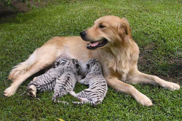 animal_adoptions_01