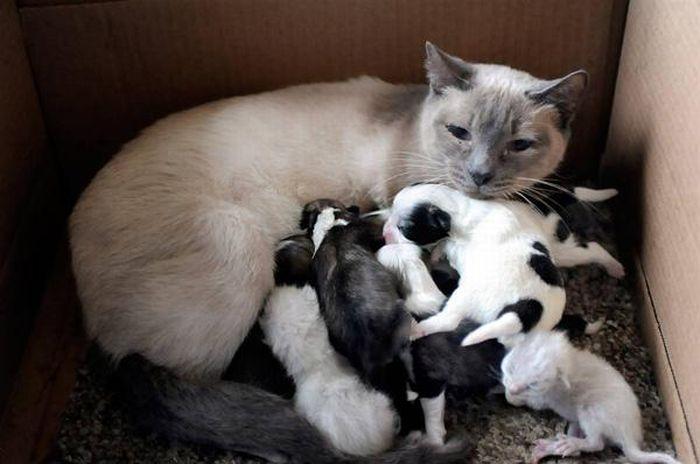 animal_adoptions_05