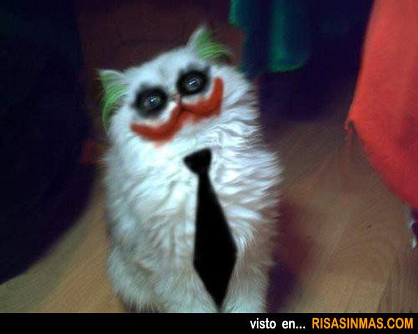 gato-un-poquito-maquillado
