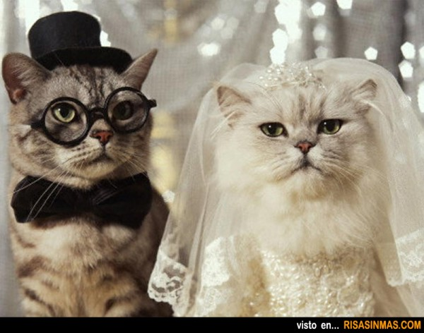 gatos-recien-casados