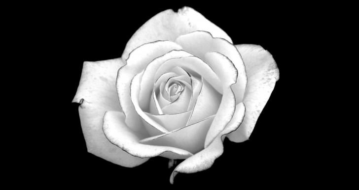 rosa-vientos