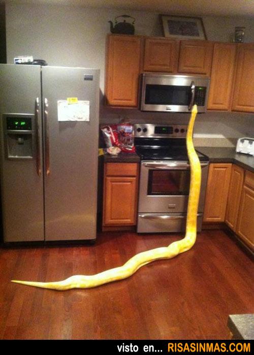 Sorpresa-en-la-cocina