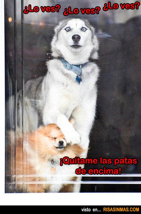 perros-mirando-por-la-ventana