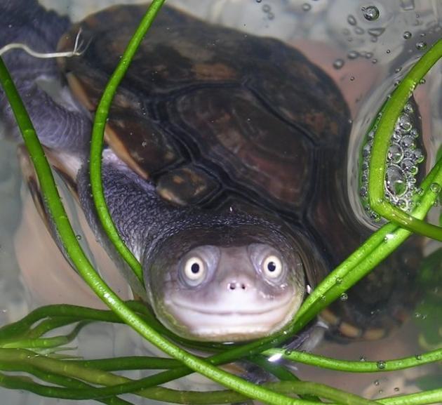 tortuga-sonriendo