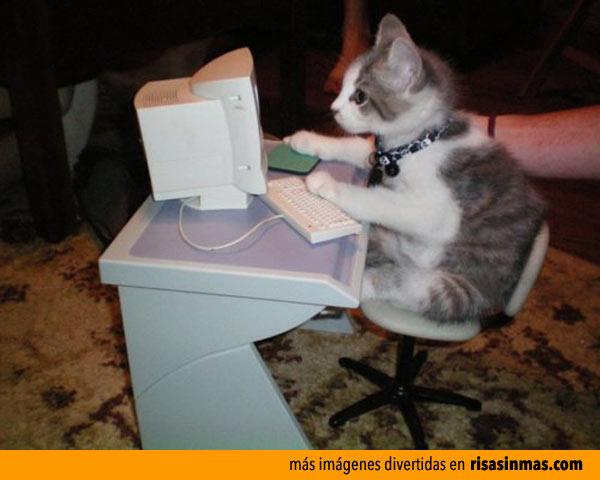 gatito-navegando-por-internet