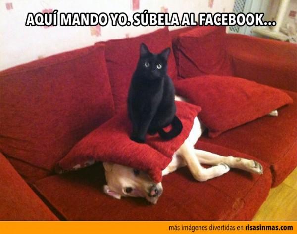 gato-facebook