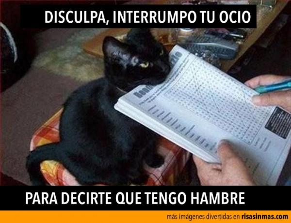 gato-hambriento