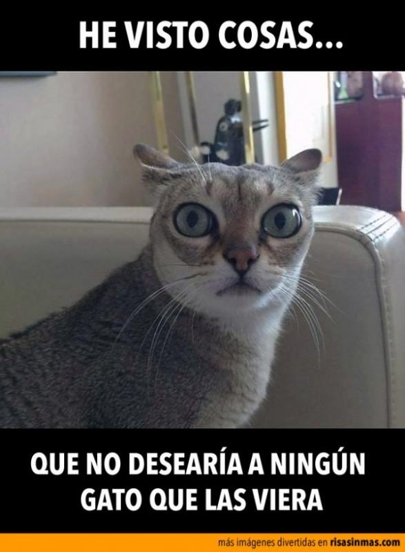 gato-ojos