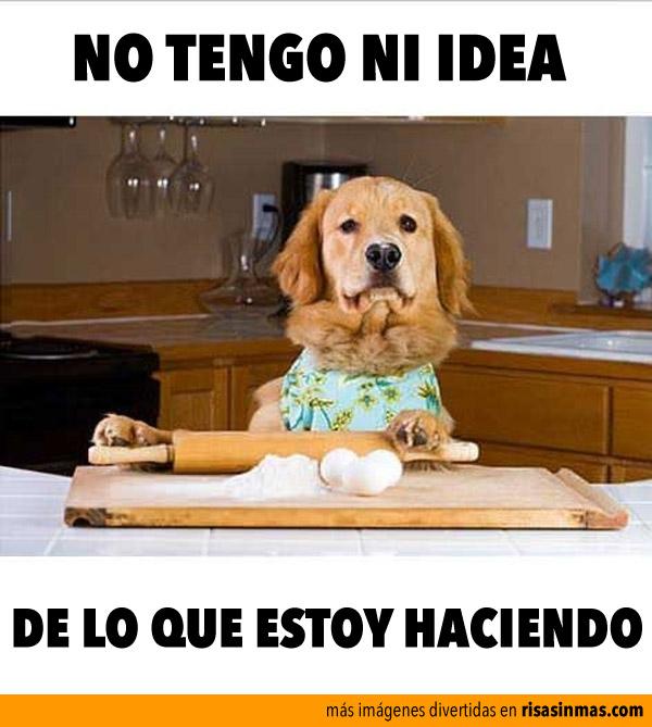 perro-cocinero