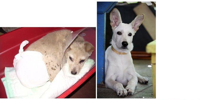 perros-abandonados-antes-despues-adopcion-01