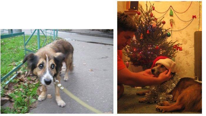 perros-abandonados-antes-despues-adopcion-02
