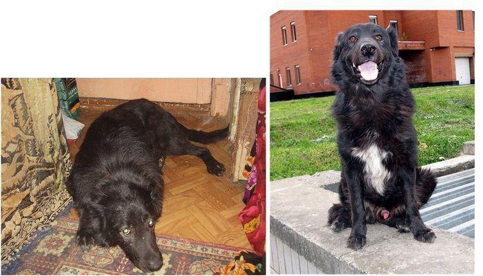 perros-abandonados-antes-despues-adopcion-03