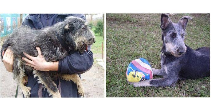 perros-abandonados-antes-despues-adopcion-05