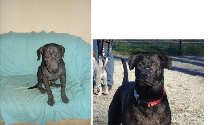 perros-abandonados-antes-despues-adopcion-06