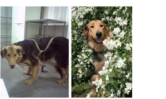 perros-abandonados-antes-despues-adopcion-07