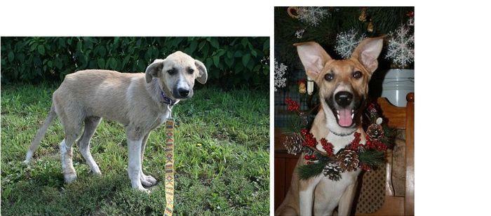 perros-abandonados-antes-despues-adopcion-08