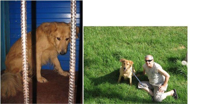 perros-abandonados-antes-despues-adopcion-09